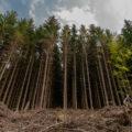 Wildnis Trail Eifel - Etappe 1