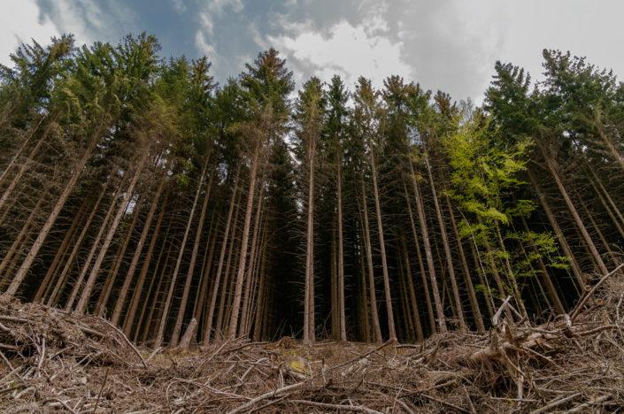 Wildnis-Trail erste Etappe Nationalpark Eifel