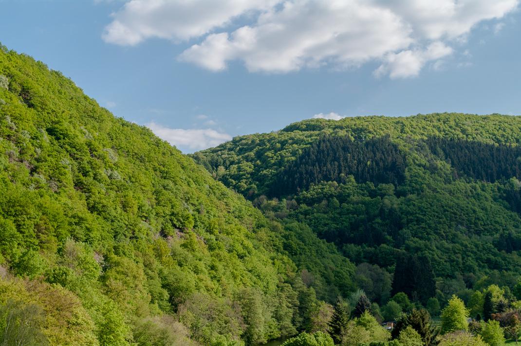Wildnis Trail Eifel riesige Buchenwälder
