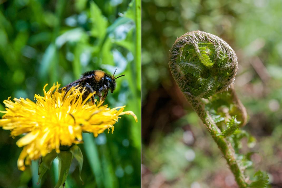 Wildnis Trail Eifel Flora und Fauna