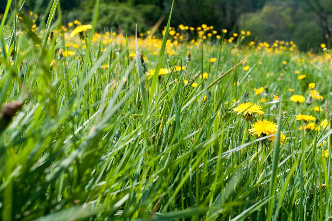 Wildnis Trail Eifel blühende Wiesen