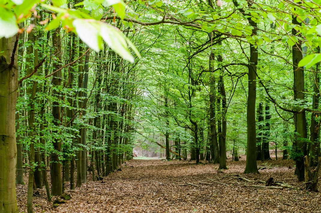 Wildnis Trail eifel vierte Etappe im Nationalpark