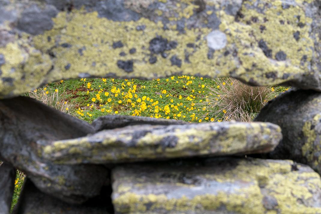 Blumen und Flora sowie Fauna auf dem Weg zur Kempspitze