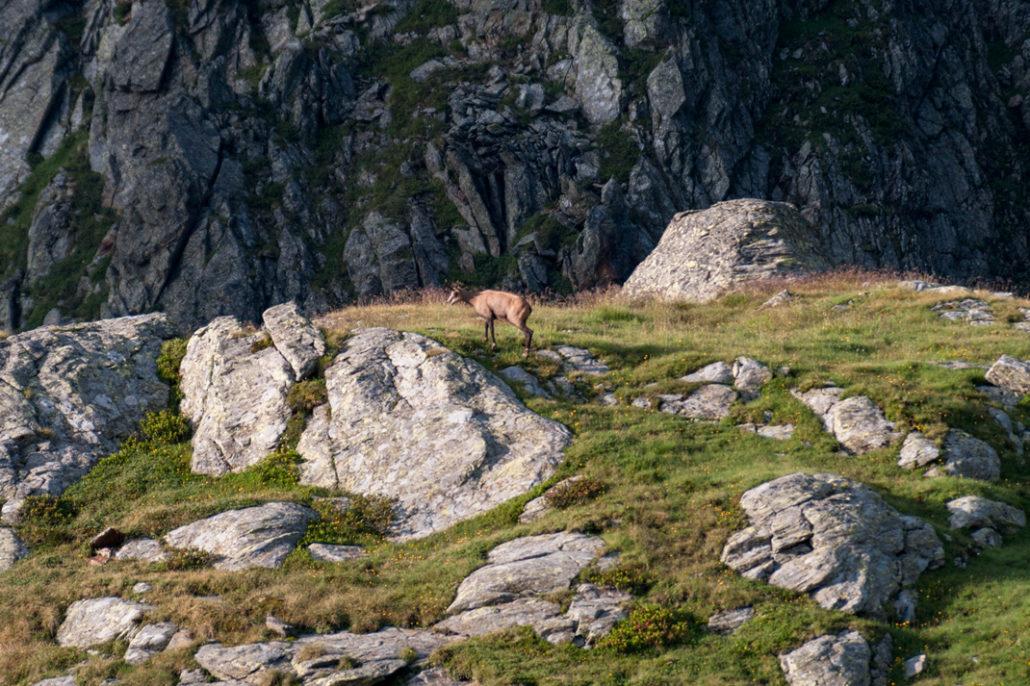 Gams im Pustertal unmittelbar vor der Kempspitze