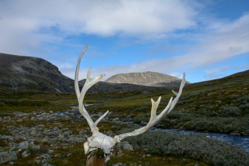 Foto Adventskalender, Trekking, Dovrefjell National Park, Norwegen, Rentiergeweih
