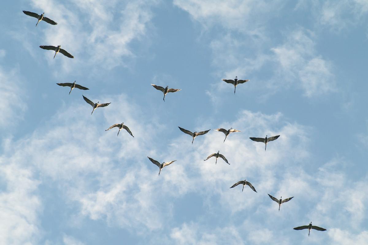 Adventskalender, Kraniche, Vogelzug, Ruhrgebiet