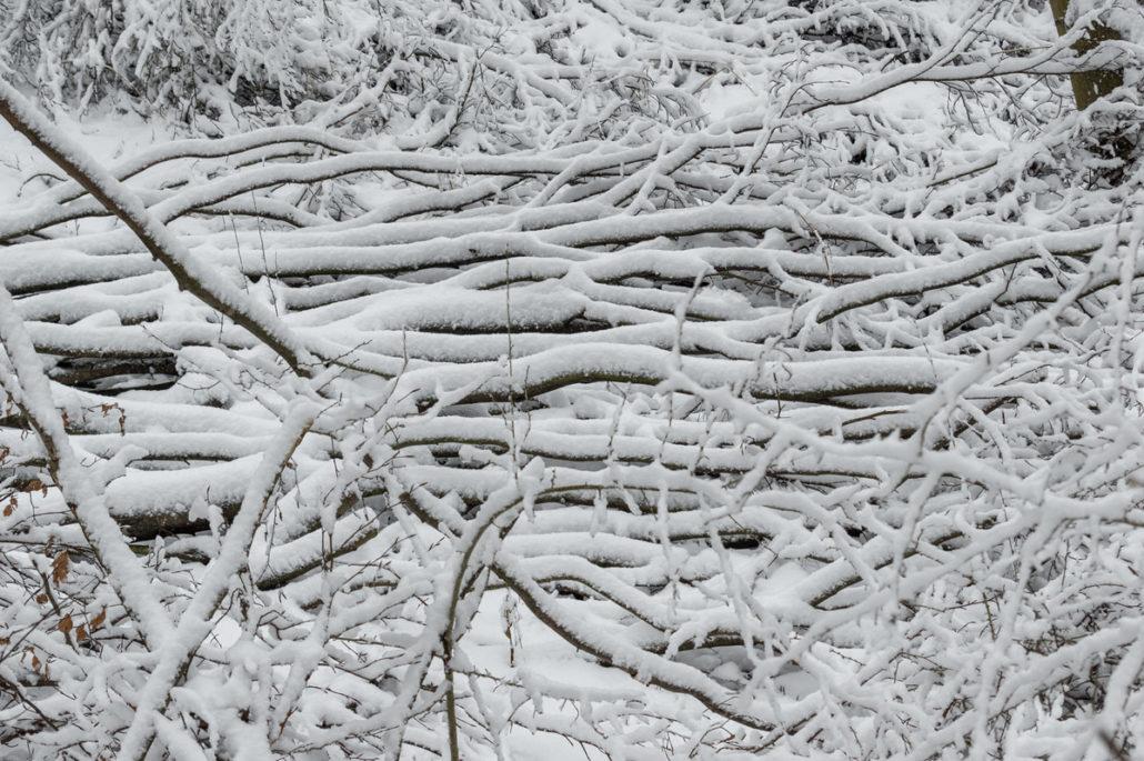Winterwanderung, Äste, Schnee, Wald, Eifel